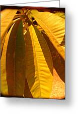 Perfection In Yellow Greeting Card