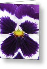 Perfectly Pansy 01 Greeting Card