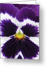 Perfectly Pansy 02 Greeting Card