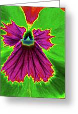 Perfectly Pansy 04 - Photopower Greeting Card