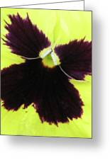 Perfectly Pansy 05 Greeting Card