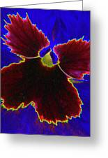 Perfectly Pansy 05 - Photopower Greeting Card