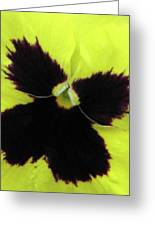 Perfectly Pansy 06 Greeting Card
