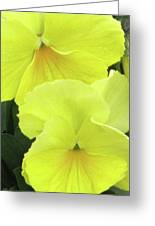 Perfectly Pansy 09 Greeting Card