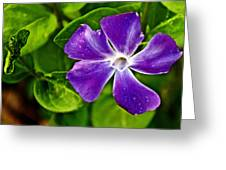 Periwinkle At Pilgrim Place In Claremont-california Greeting Card
