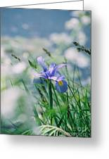 Periwinkle Iris Greeting Card