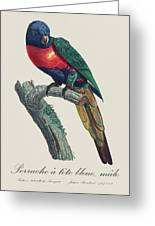 Perruche A Tete Bleue, Male / Rainbow Lorikeet, Male - Restored 19th Cent. Illustration By Barraband Greeting Card
