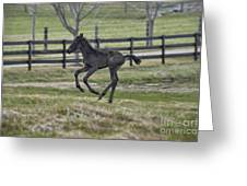 Perry's Colt Running Greeting Card