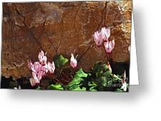 Persian Cyclamen Greeting Card