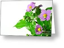 Persian Violets Greeting Card