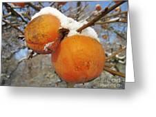 Persimmon Tree Greeting Card