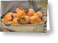Persimmons In A Bucket Greeting Card