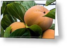 Persimmons Ready For Harvest Greeting Card