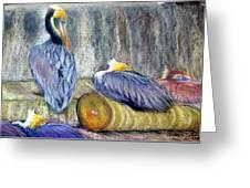 Peruvian Pelicans Three Pastel Greeting Card