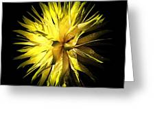 Pervigeo 1 Greeting Card