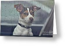 Pet Looking Out Car Window On Rainy Day Greeting Card