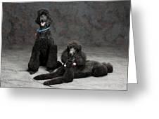 Pet Partners #346 Greeting Card