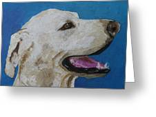 Pet Portrait Of Smiley Riley Greeting Card