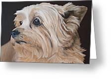 Pet Portrait Painting Commission Cairn Terrier Greeting Card