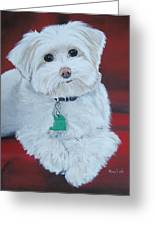 Pet Portrait Painting Commission Maltese Dog  Greeting Card