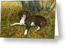 Pet Portrait - Springer Spaniel, Milly Greeting Card
