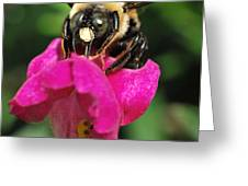 Petal Bumble Beeauty Greeting Card