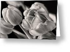 Petal Essence Greeting Card