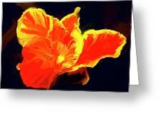 Petal Flare Greeting Card