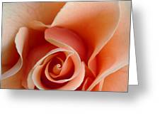 Petal Of Rose Greeting Card