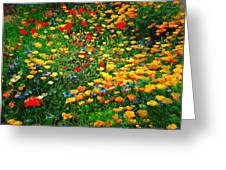 Poppy Petal Patch Greeting Card