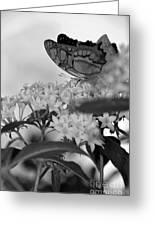 Petal Perch Greeting Card