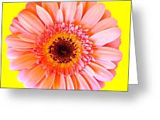 Petal Pop Designs Greeting Card