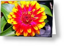Petal Pop Greeting Card
