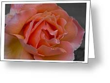 Petal Greeting Card