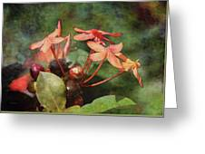 Petals And Berries 8618 Idp_2 Greeting Card