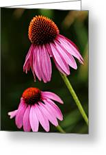 Petals And Quills Greeting Card