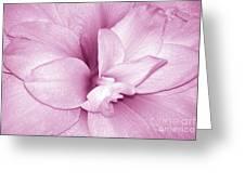 Petals In Pink Greeting Card