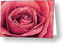 Petals Of A Rose Greeting Card