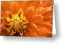 Petals Of Fire Greeting Card by Rod Sterling