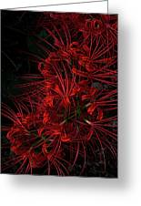 Petals Of Fireworks Greeting Card