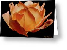Petals Of Orange Sorbet Greeting Card by DigiArt Diaries by Vicky B Fuller