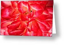 Petals Of Rose Greeting Card