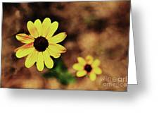 Petals Stretched Greeting Card