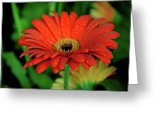 Petals With Droplets Greeting Card