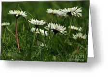 Petite Daisies 5 Greeting Card