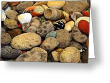 Petoskey Stones With Shells Ll Greeting Card