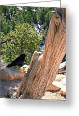 Petrified Raven At Grand Canyon Greeting Card