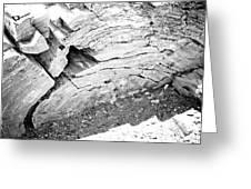 Petrified Wood #5 Greeting Card