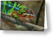 Ambilobe Panther Chameleon Greeting Card