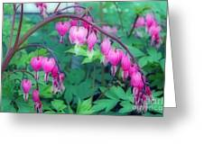Pretty Little Bleeding Hearts Greeting Card